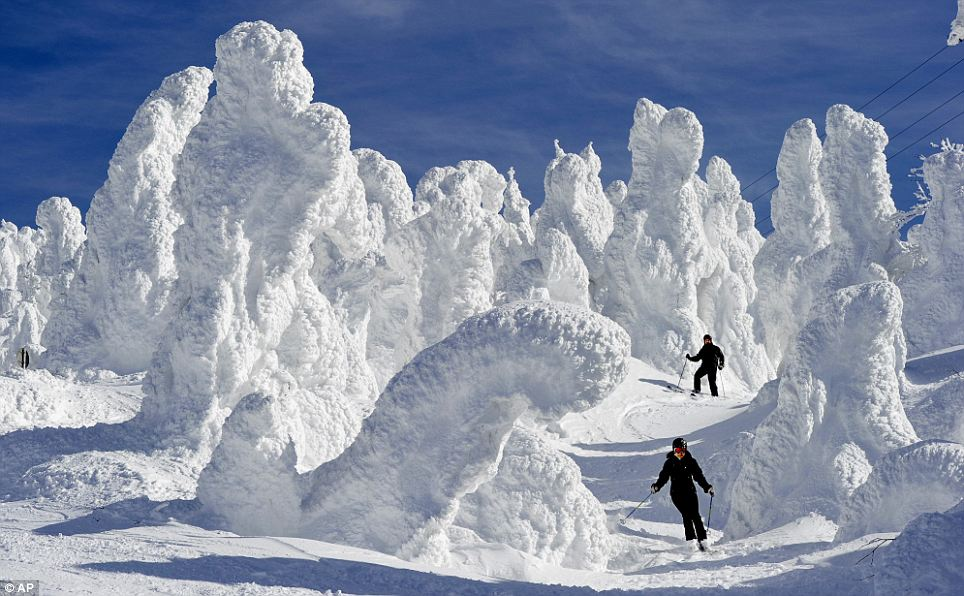 Skiers are dwarfed by  ice-coated trees at the Zao Onsen ski resort at Zao, in northern Japan